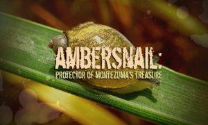 Montezuma's Treasure Utah Ambersnail